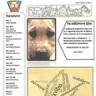 Περιοδικό ποικίλης ύλης της Στ2΄ - Τεύχος Α΄
